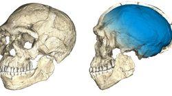 Les premiers humains sont bien plus vieux qu'on ne le pensait (et ne vivaient pas où on le