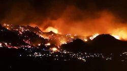 Plus de 1300 hectares de végétation ravagés par des incendies en