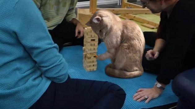 Ce chat et sa drôle de position valent le