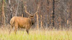 Les chasseurs ne pourront plus abattre un animal s'il s'enfuit dans une zone