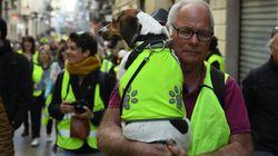 Moins de 6000 manifestants en France à la mi-journée de l'acte XVI des gilets