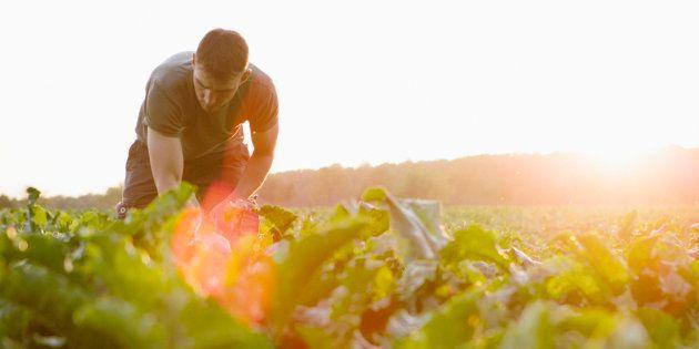 Ne laissons pas la grande distribution dicter sa loi à l'agriculture