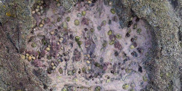 Une dizaine d'empreintes de sauropodes ont été découvertes sur l'îlede