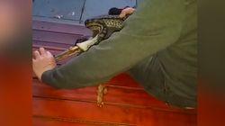 Ce serpent a avalé... une pince de