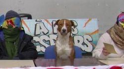 Le compte (parodique) du chien des grévistes de Tolbiac a plus d'abonnés que les grévistes