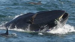 Un plongeur, avalé par une baleine, s'en sort