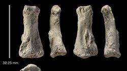 Ce doigt vieux de 85.000 ans permet de mieux comprendre l'expansion d'Homo sapiens dans le
