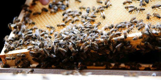 Pourquoi les abeilles sont essentielles à l'équilibre de notre planète.