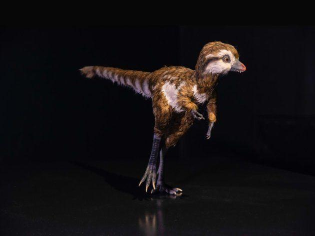 Un tyrannosaure de quelques semaines, modélisé par le Museum d'Histoire Naturelle de