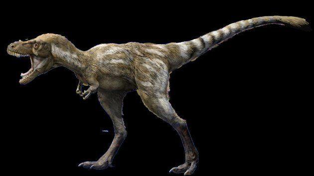Un tyrannosaure âgé de quatre ans, modélisé par le Muséum d'histoire naturelle de