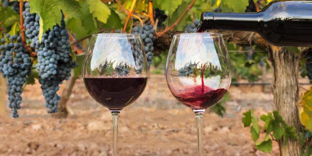 Le bordeaux version 2050 imaginé par ce viticulteur n'a pas grand chose à voir avec celui que vous