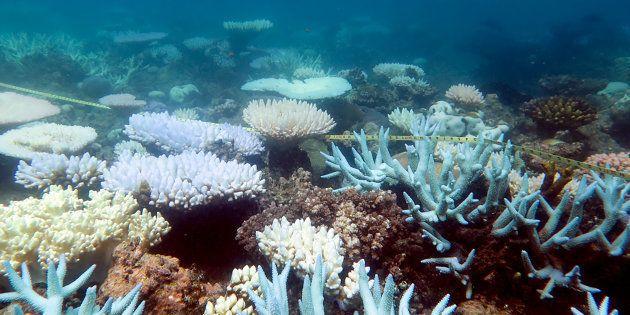 La Grande barrière de corail, joyau du patrimoine mondial, a subi une