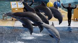Marineland ne veut vraiment pas arrêter la reproduction de dauphins en