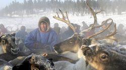 Une épidémie d'anthrax en Sibérie tue 1500 rennes avec la fonte du