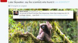 Mark Hamill est le premier fan de cette nouvelle espèce de singe