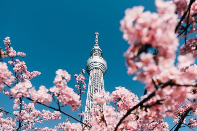 写真は桜のイメージ画像です
