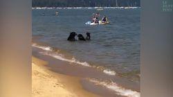 Cette famille d'ours va à la plage, comme tout le