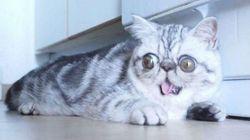 Ce chat est le nouveau Grumpy