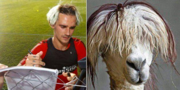 La nouvelle coupe d'Antoine Griezmann a tout de celle d'un lama