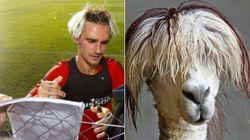La nouvelle coupe de Griezmann a tout de celle d'un lama (et ce n'est pas la première