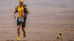 Il fait un ultra-marathon, une chienne errante termine la course avec