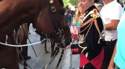 Vous ne devinerez jamais ce que mangent les chevaux de la garde