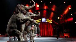 Ce cirque américain mythique qui ferme ses portes a inspiré une expression de la langue