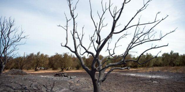 Après les incendies, comment la forêt se