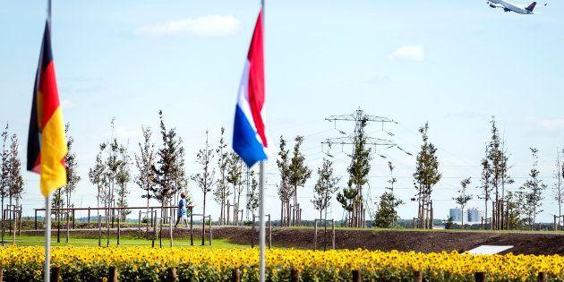 Les arbres plantés pour commémorer le troisième anniversaire du crash du MH17, le 17