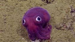 Cette petite bête sous-marine a fait craquer toute une équipe de