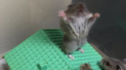 La photo de ce hamster vaut le