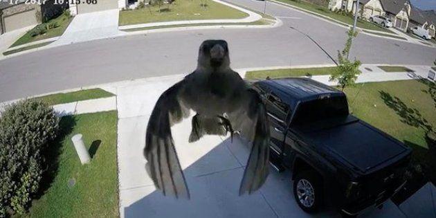 On peut voir un oiseau suspendu dans les airs, mais ce n'est pas un