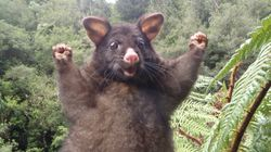 Cet opossum vaut le