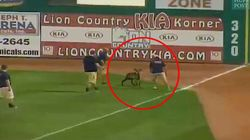 Un mouton interrompt un match de baseball à cause d'un singe cowboy et d'un monstre