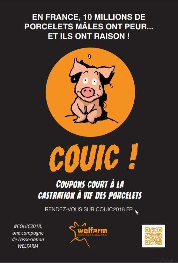 Castration à vif des porcelets: l'affiche que la Bretagne ne veut pas
