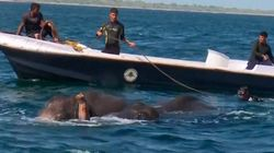 Le sauvetage de ces jeunes éléphants en mer a été filmé par la Marine