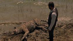 Mais que vient faire ce tigre dans le teaser de Westworld saison