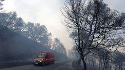 Après les incendies, comment la forêt
