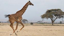 Des scientifiques découvrent l'existence de quatre espèces de