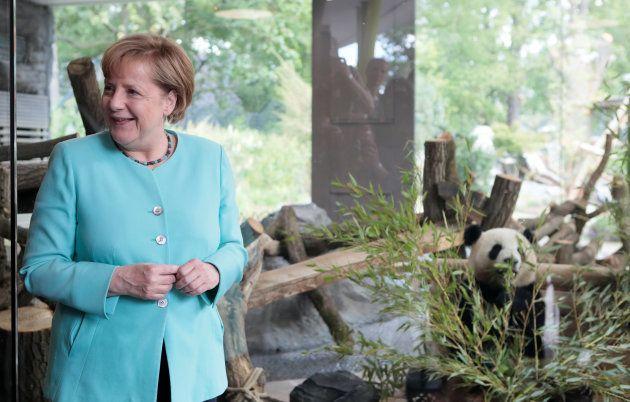 Angela Merkel fait la connaissance de Meng Meng et Jiao Qing, les deux pandas géants de Chine que le...