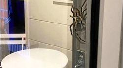 Ils voulaient se faire un barbecue, cette araignée titanesque en a décidé