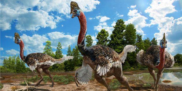 Ce nouveau dinosaure à plumes ressemble à une autruche punk (dessin