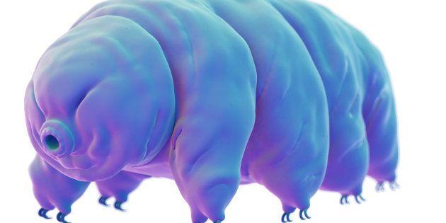 Cet animal microscopique pourrait bien être la solution pour survivre pendant dix milliards