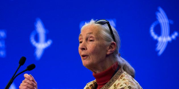 Dame Jane Goodall attends a panel
