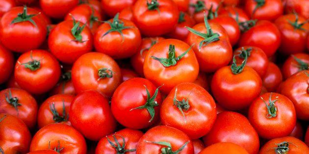 Redonner du  goût aux tomates industrielles, c'est le pari de ces scientifiques