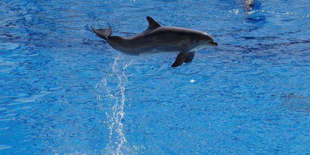 Le Conseil d'Etat maintient l'interdiction de la reproduction des dauphins en captivité (mais suspend une mesure)