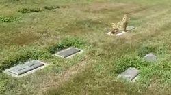 La tombe de ce chien offre une illusion d'optique