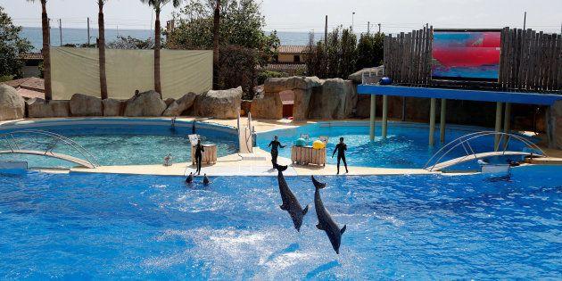 10 attractions cruelles pour les animaux à éviter pendant vos vacances.