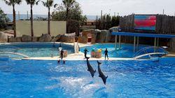 BLOG - 10 attractions cruelles pour les animaux à éviter pendant vos