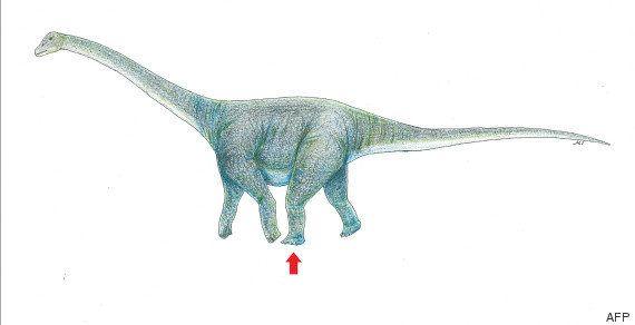 Le titanosaure portait (vraiment) bien son nom, la preuve avec cette trace de